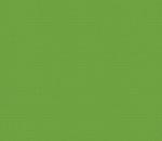 Unicolour Kiwi