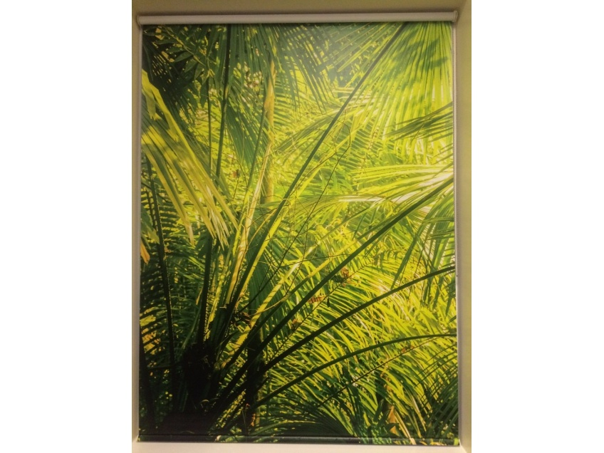Jungle blinds for schools -