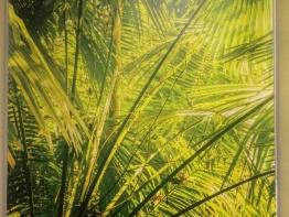 jungle-blinds-for-schools-3.JPG