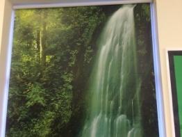 jungle-blinds-for-schools-5.jpg