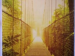 jungle-blinds-for-schools-4.JPG
